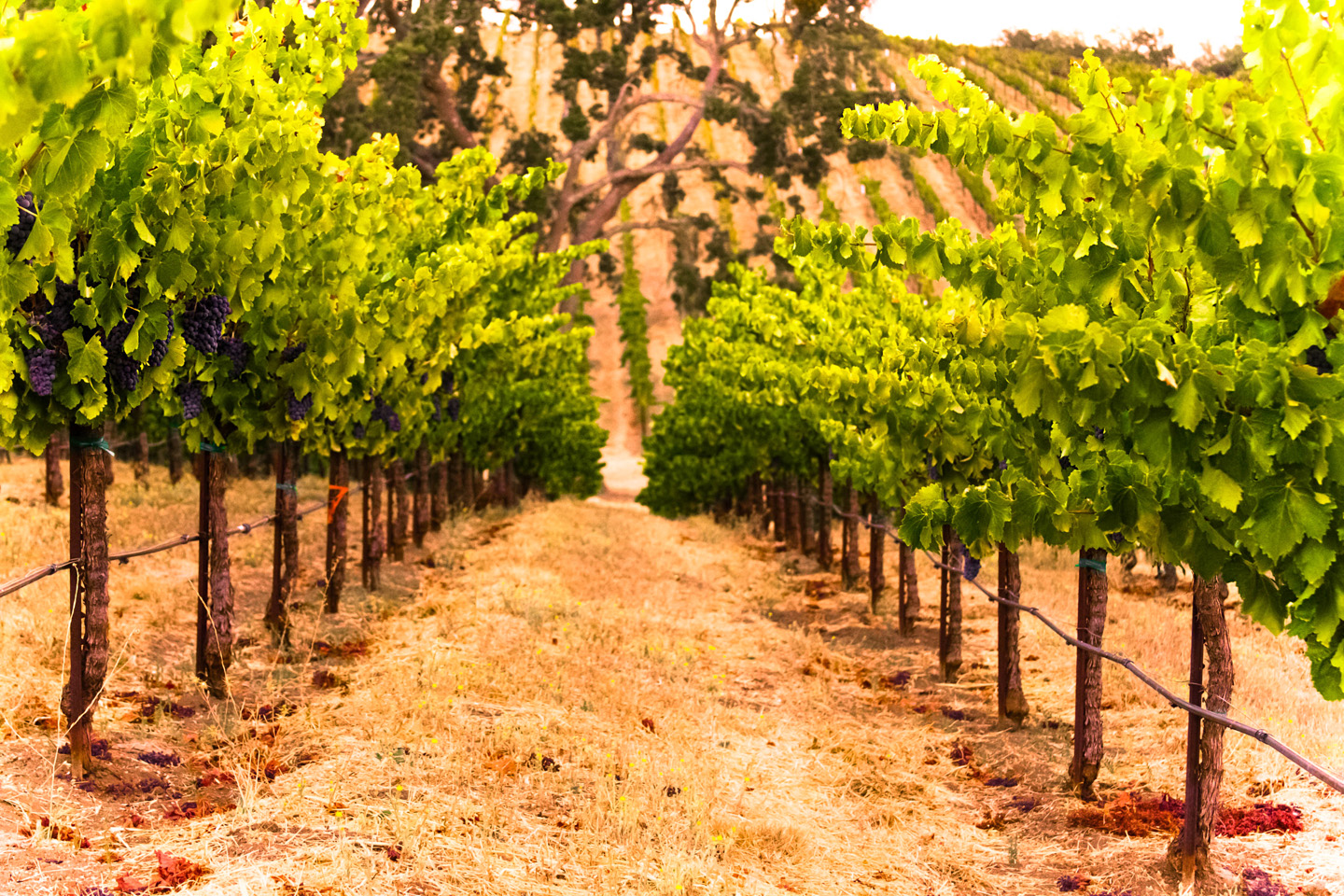 paso robles black single men Of single-family homes, townhomes, and condominiums to  city of paso robles,  home to 170 wineries  in the number of people seeking health services   california men's colony  august 2014 (black knight financial.